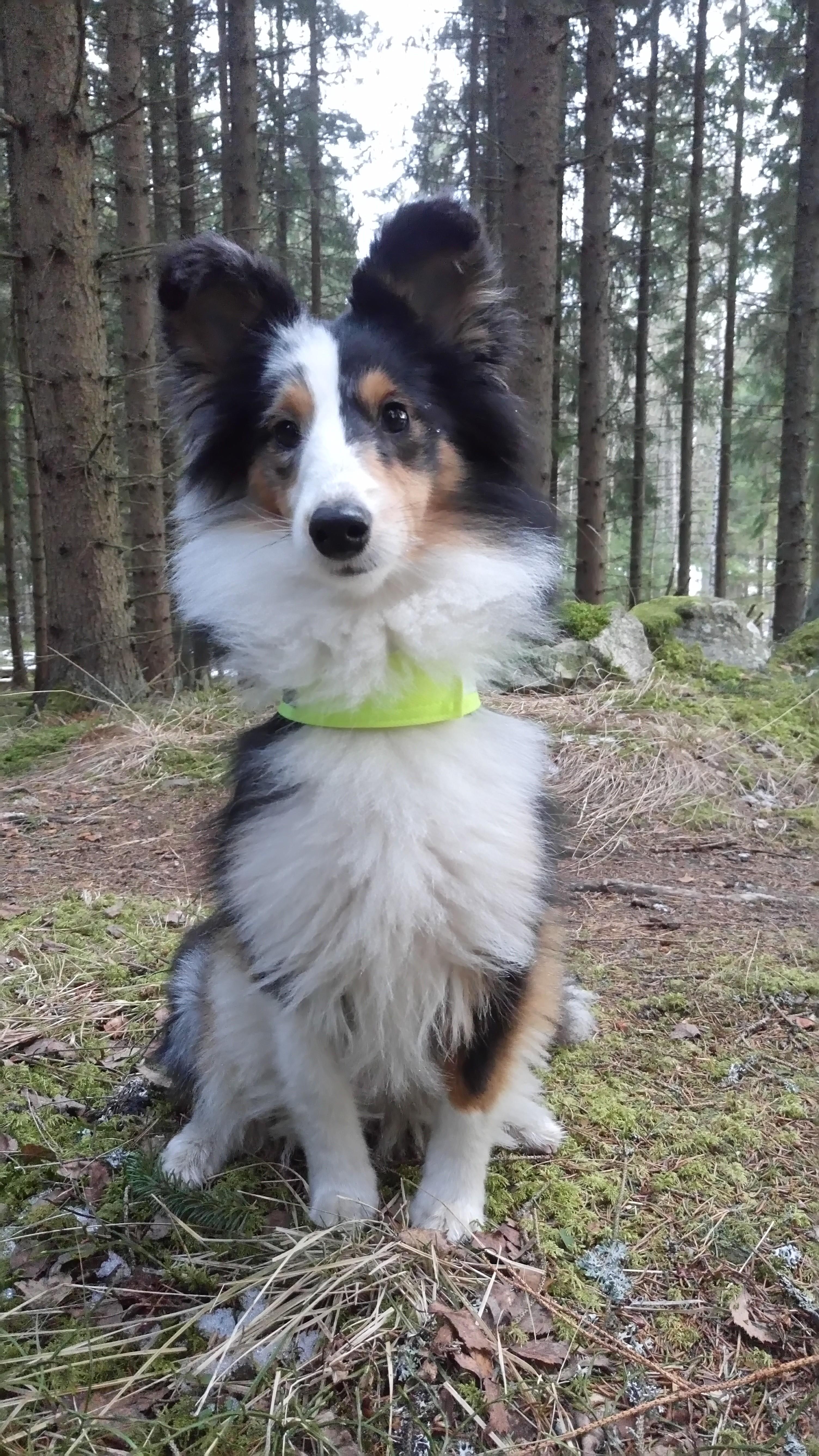Avslut och nystart - bra med hundkompisar i skogen!