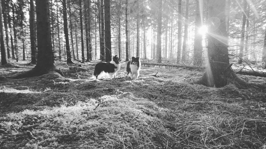 Långledigt, varvar julstök med skogen och hundträning ??