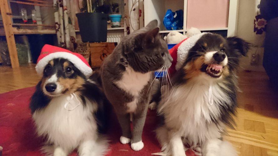 Julförberedelser men även lite träning ? och skogen ???